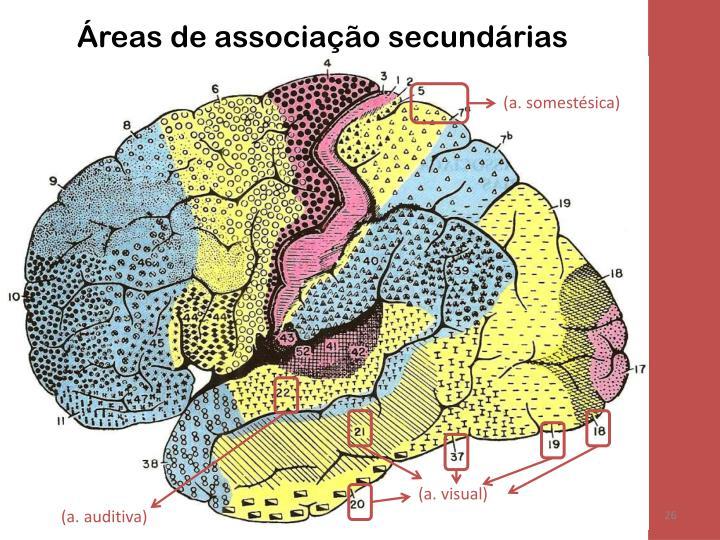 Áreas de associação secundárias