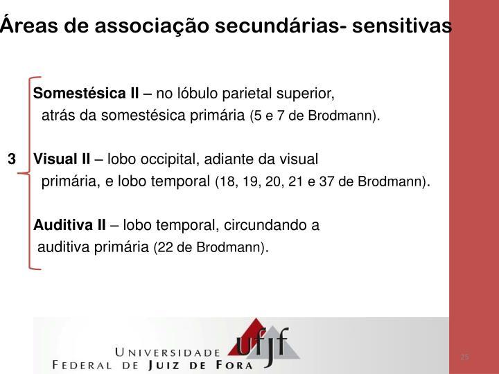Áreas de associação secundárias- sensitivas