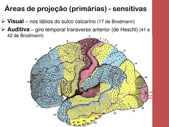 Áreas de projeção (primárias) - sensitivas