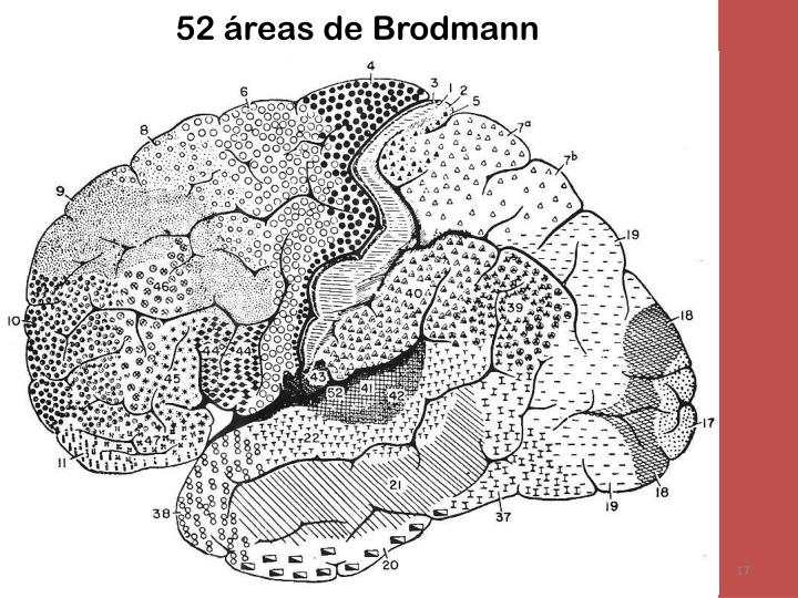 52 áreas de