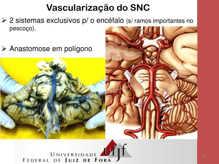 Vascularização do SNC