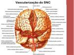 vasculariza o do snc2
