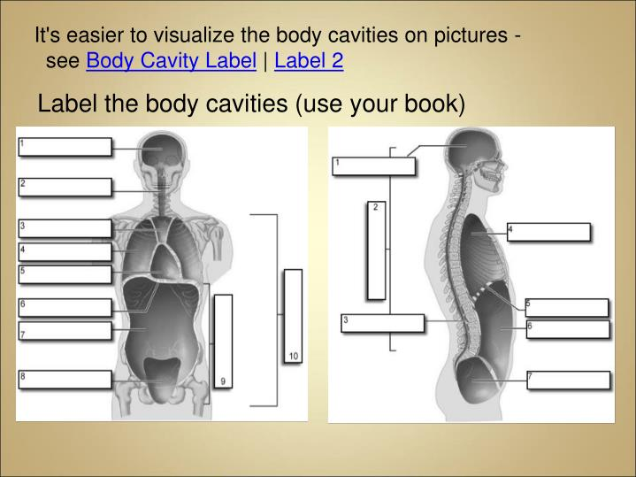 It's easier to visualize the body cavities on pictures -  see