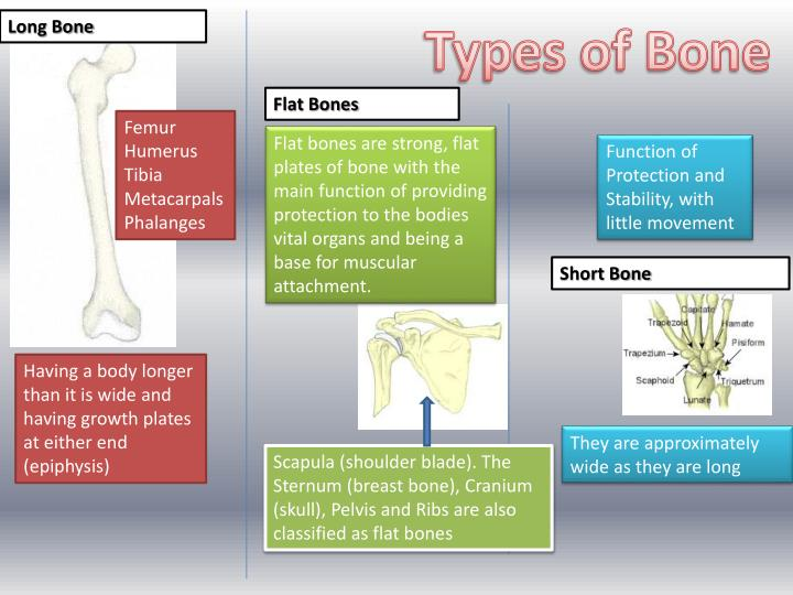 Types of Bone