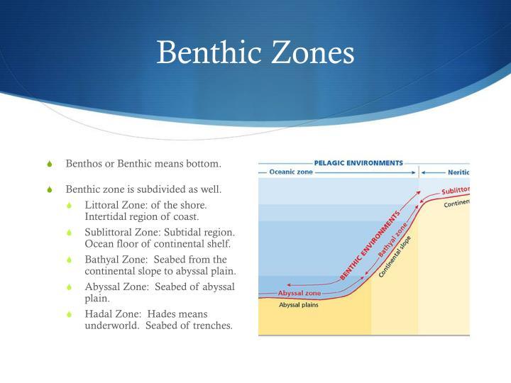 Benthic Zones