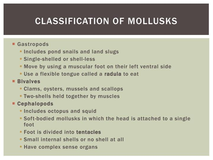 Classification of mollusks