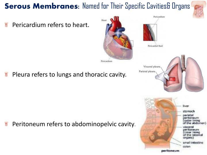 Serous Membranes: