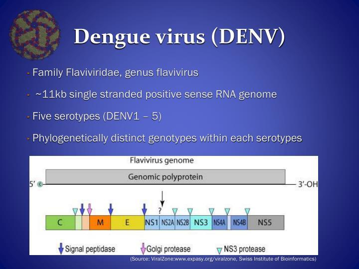 Dengue virus (DENV)