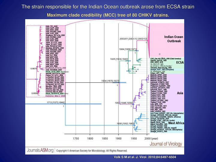The strain responsible for the Indian Ocean outbreak arose from ECSA strain