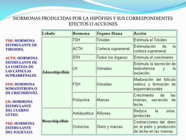 HORMONAS PRODUCIDAS POR LA HIPÓFISIS Y SUS CORRESPONDIENTES EFECTOS O ACCIONES