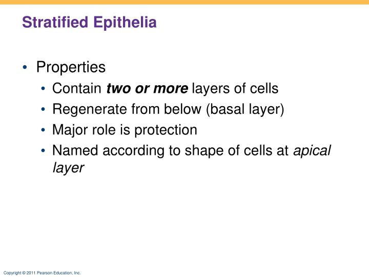 Stratified Epithelia