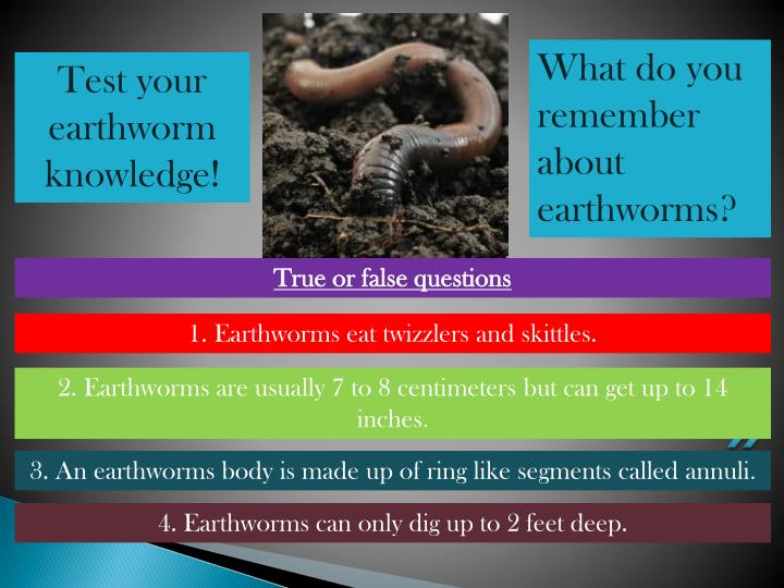 What do you remember about earthworms?