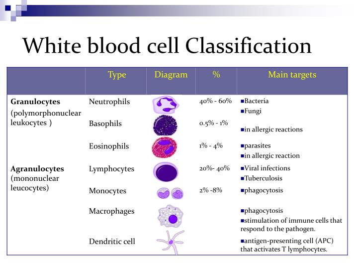 White blood cell Classification