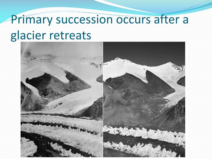 Primary succession occurs after a glacier retreats