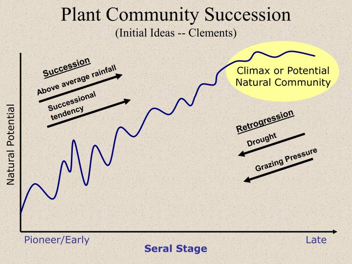 Plant Community Succession