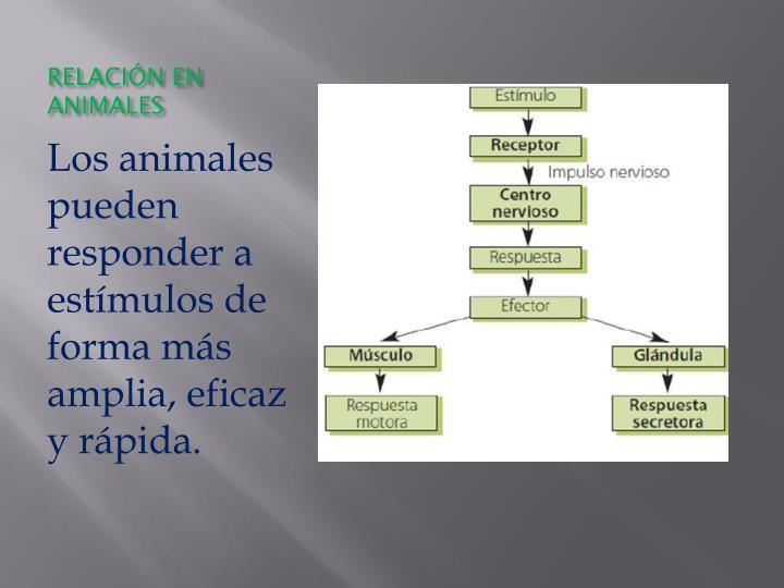 RELACIÓN EN ANIMALES