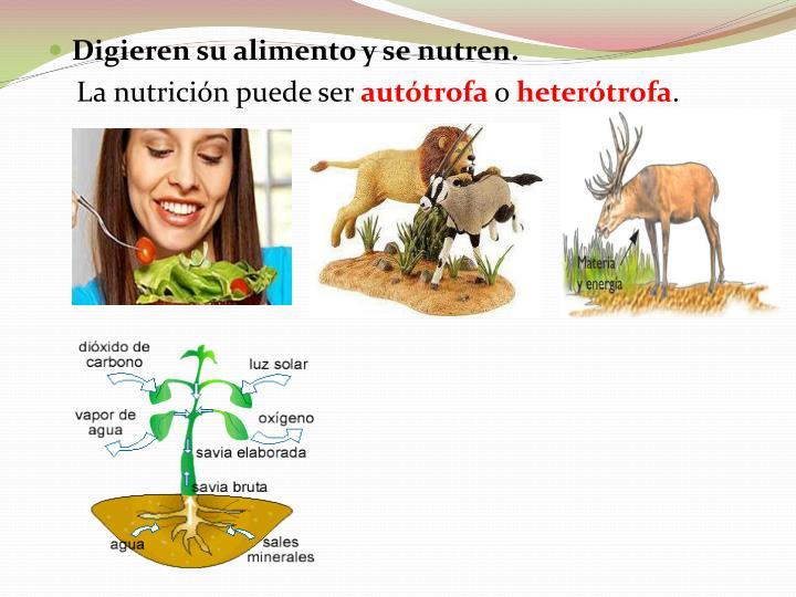 PPT - Características de los seres vivos PowerPoint..