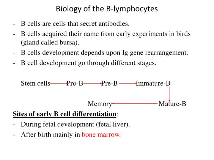 Biology of the B-lymphocytes