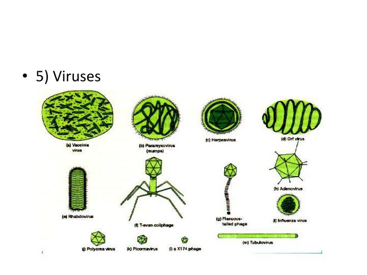 5) Viruses