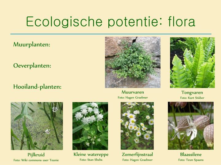 Ecologische