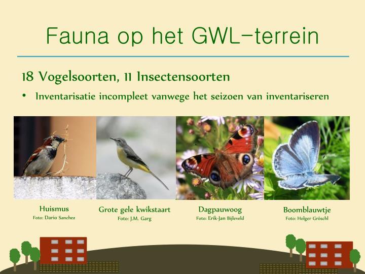 Fauna op het GWL-