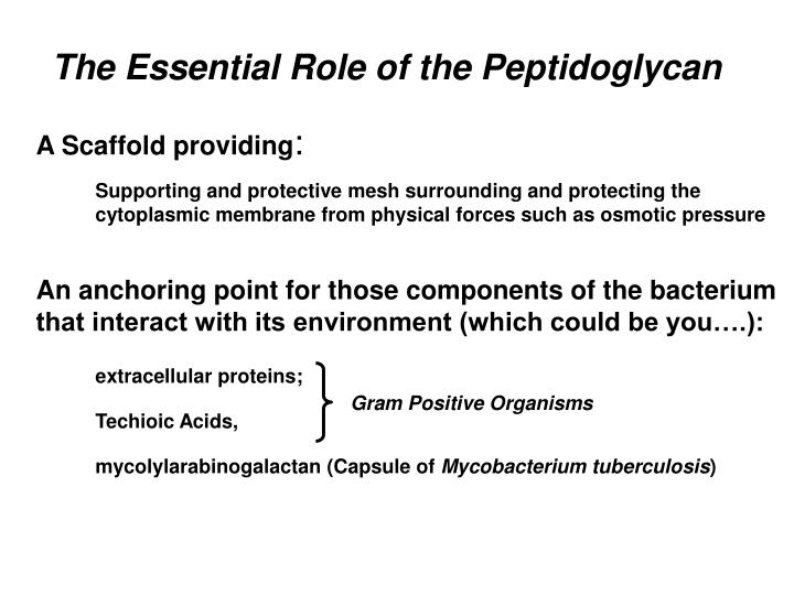 The Essential Role of the Peptidoglycan