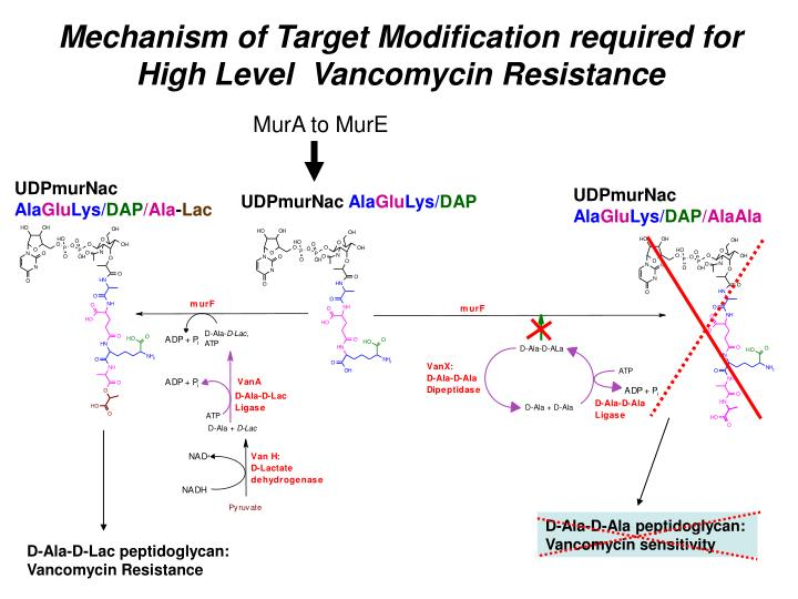 Mechanism of Target Modification required for