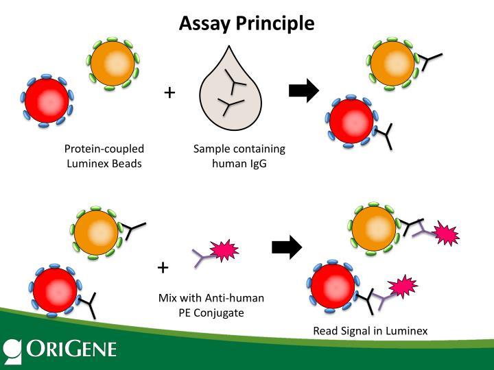 Assay Principle