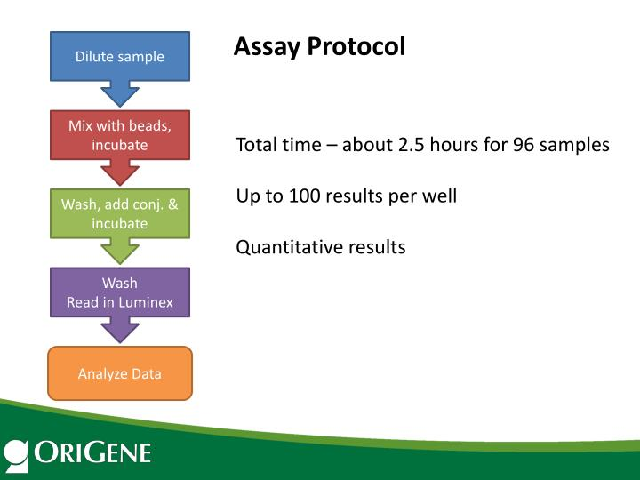 Assay Protocol
