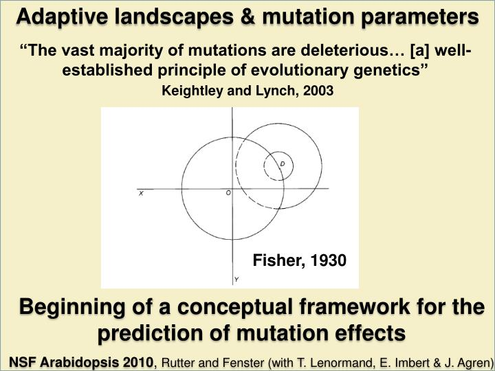 Adaptive landscapes & mutation parameters