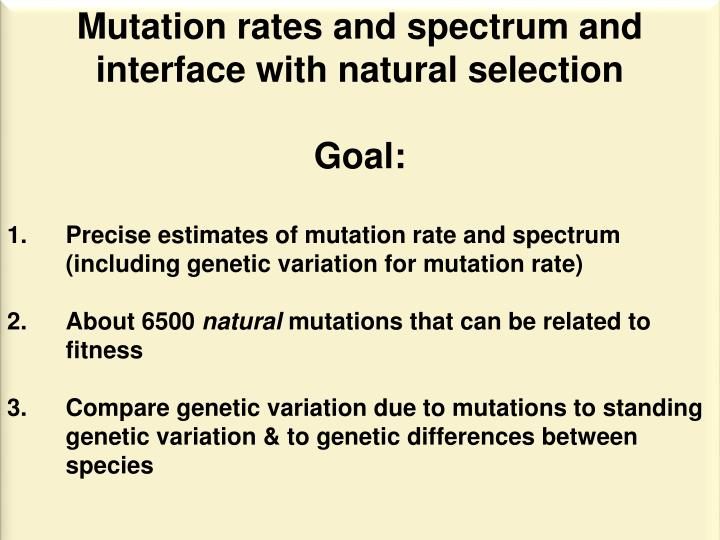 Mutation rates and spectrum and interface with natural selection