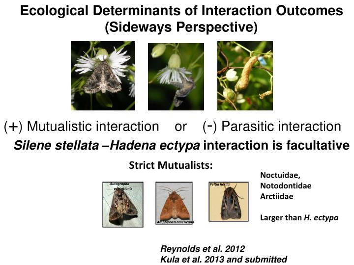 Ecological Determinants of Interaction Outcomes (Sideways Perspective)