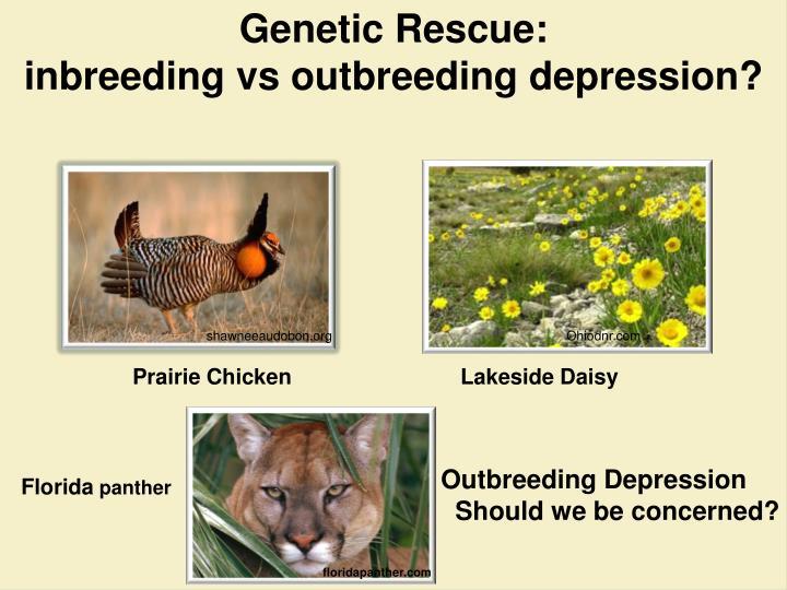 Genetic Rescue: