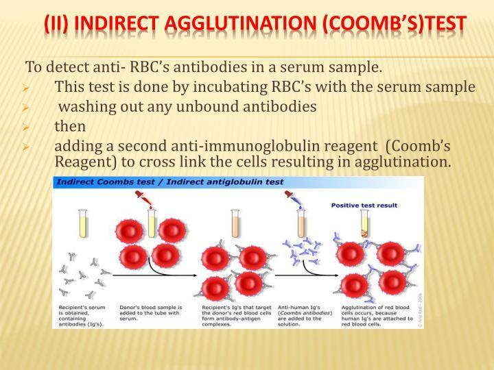 (II) indirect agglutination (