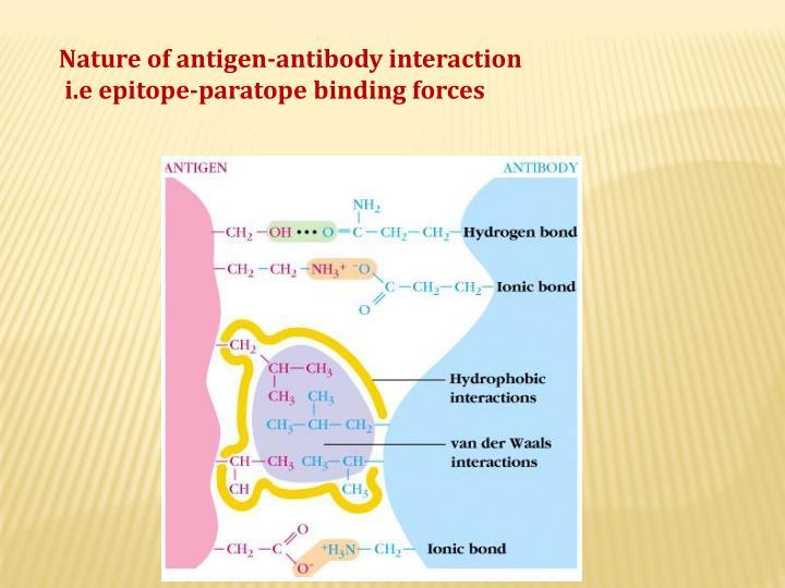 Nature of antigen-antibody interaction