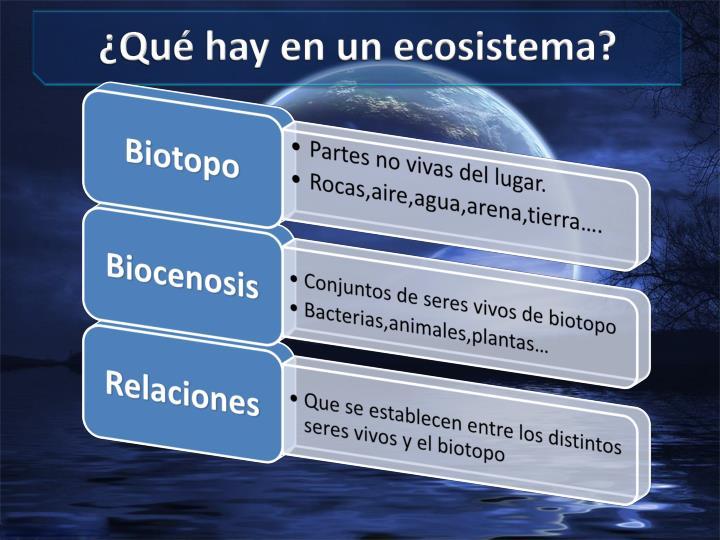 ¿Qué hay en un ecosistema?