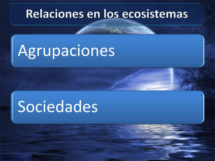 Relaciones en los ecosistemas