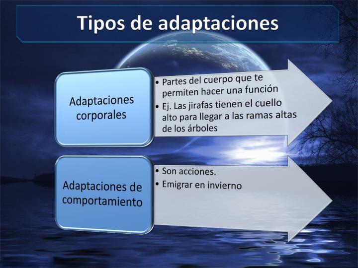 Tipos de adaptaciones