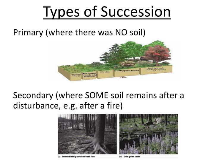 Types of Succession