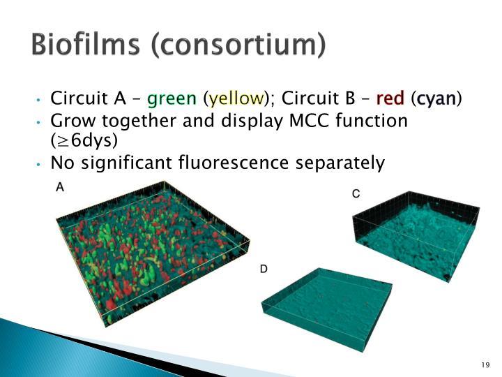 Biofilms (consortium)