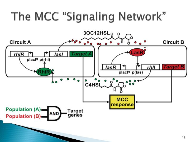 "The MCC ""Signaling Network"""