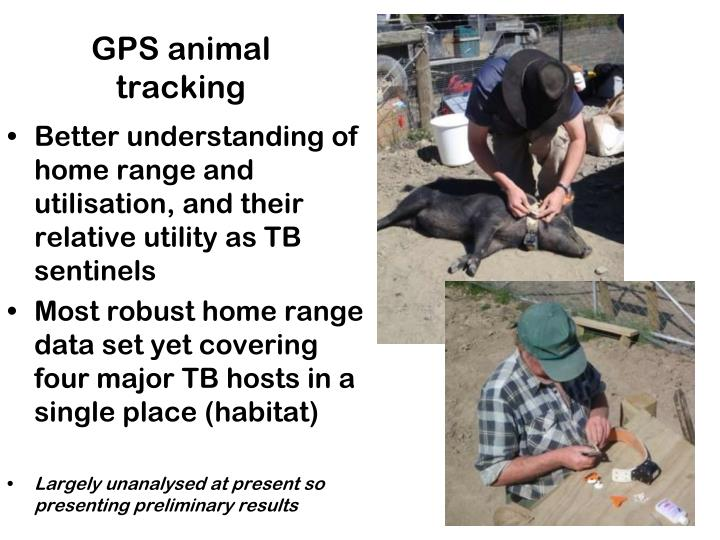 GPS animal tracking