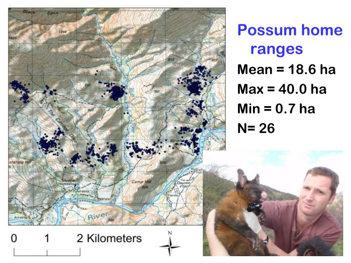 Possum home ranges