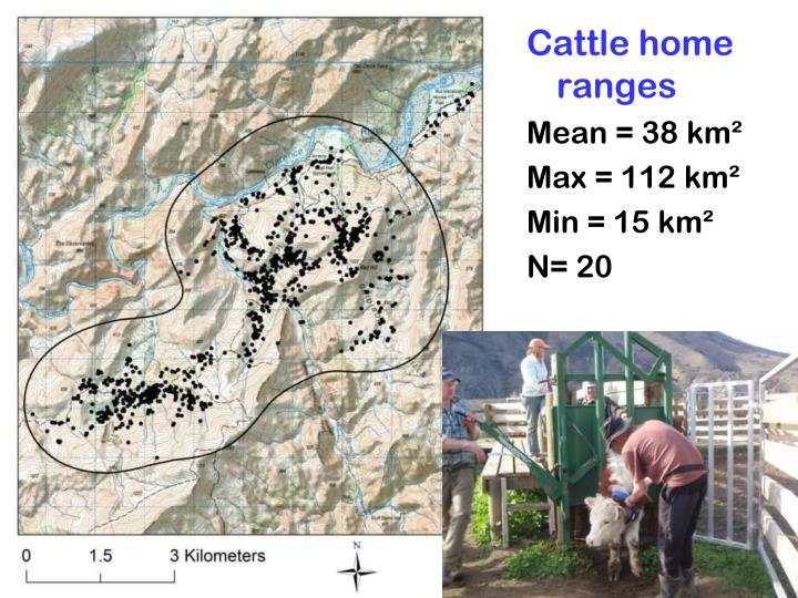 Cattle home ranges