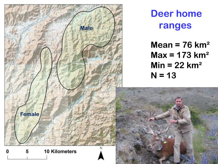 Deer home ranges