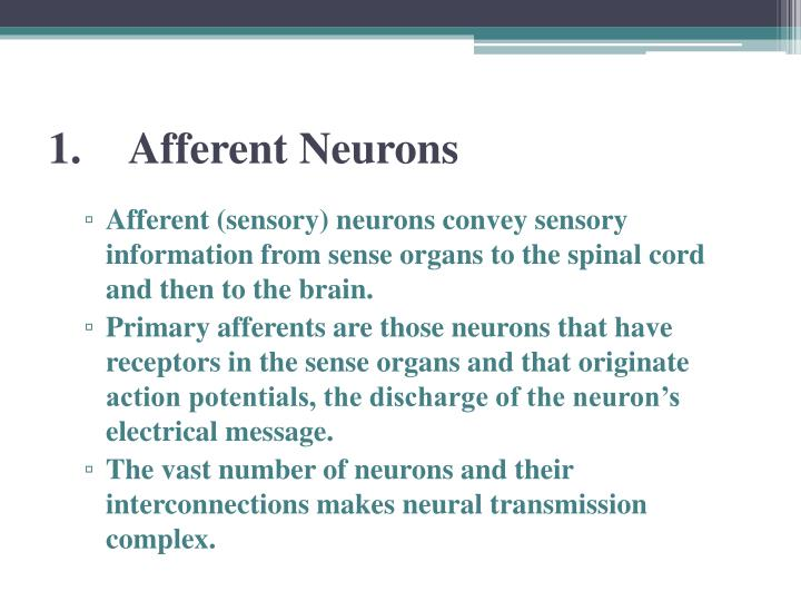 1 afferent neurons