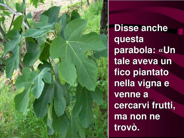 Disse anche questa parabola: «Un tale aveva un fico piantato nella vigna e venne a cercarvi frutti, ma non ne trovò.