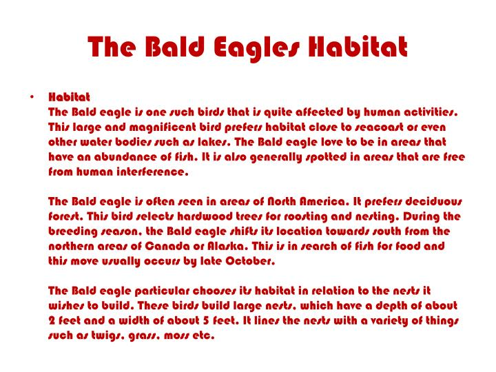 The Bald Eagles Habitat