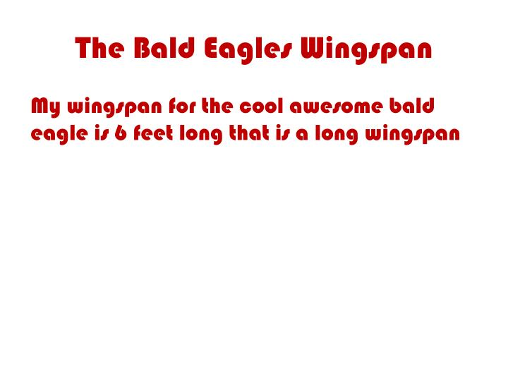 The Bald Eagles Wingspan