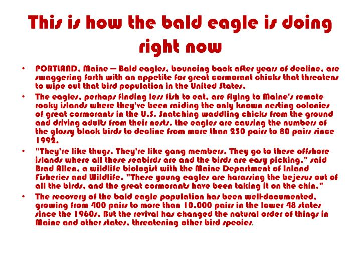 This is how the bald eagle is doing right now